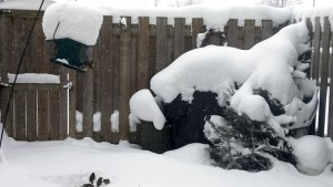 Snow piling up in my backyard